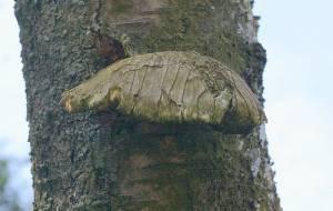 Описание грибов названия по алфавиту